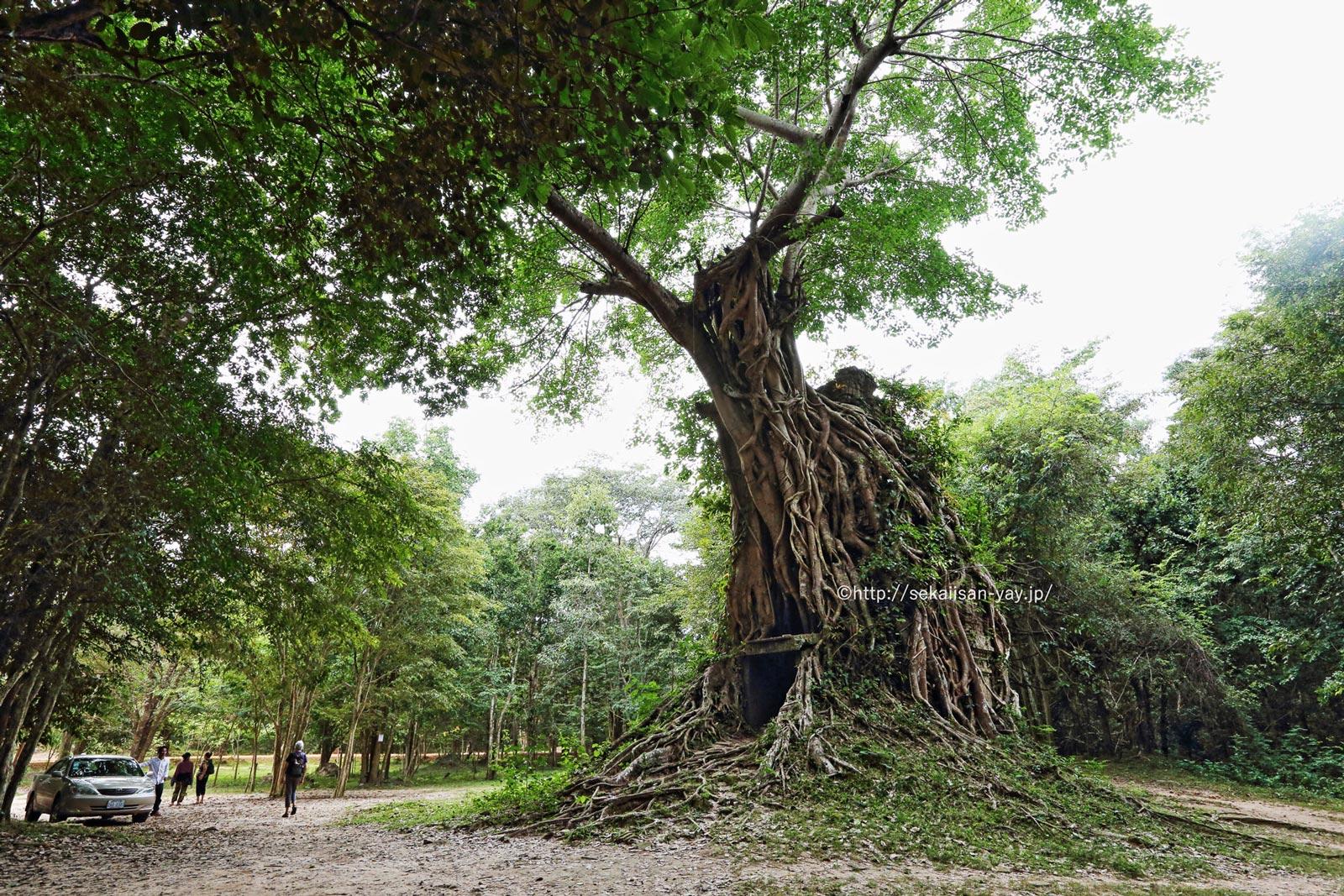 カンボジア「サンボー・プレイ・クックの寺院地区と古代イーシャナプラの考古遺跡」