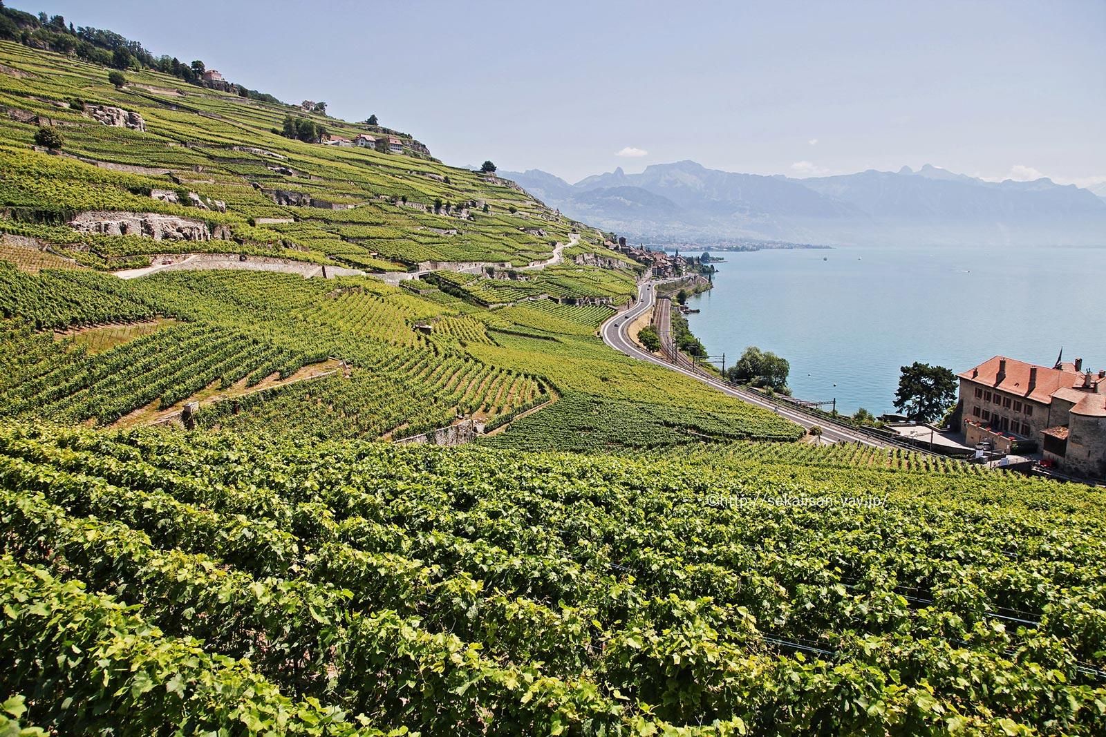 スイス「ラヴォー地区の葡萄畑」- シェーブル